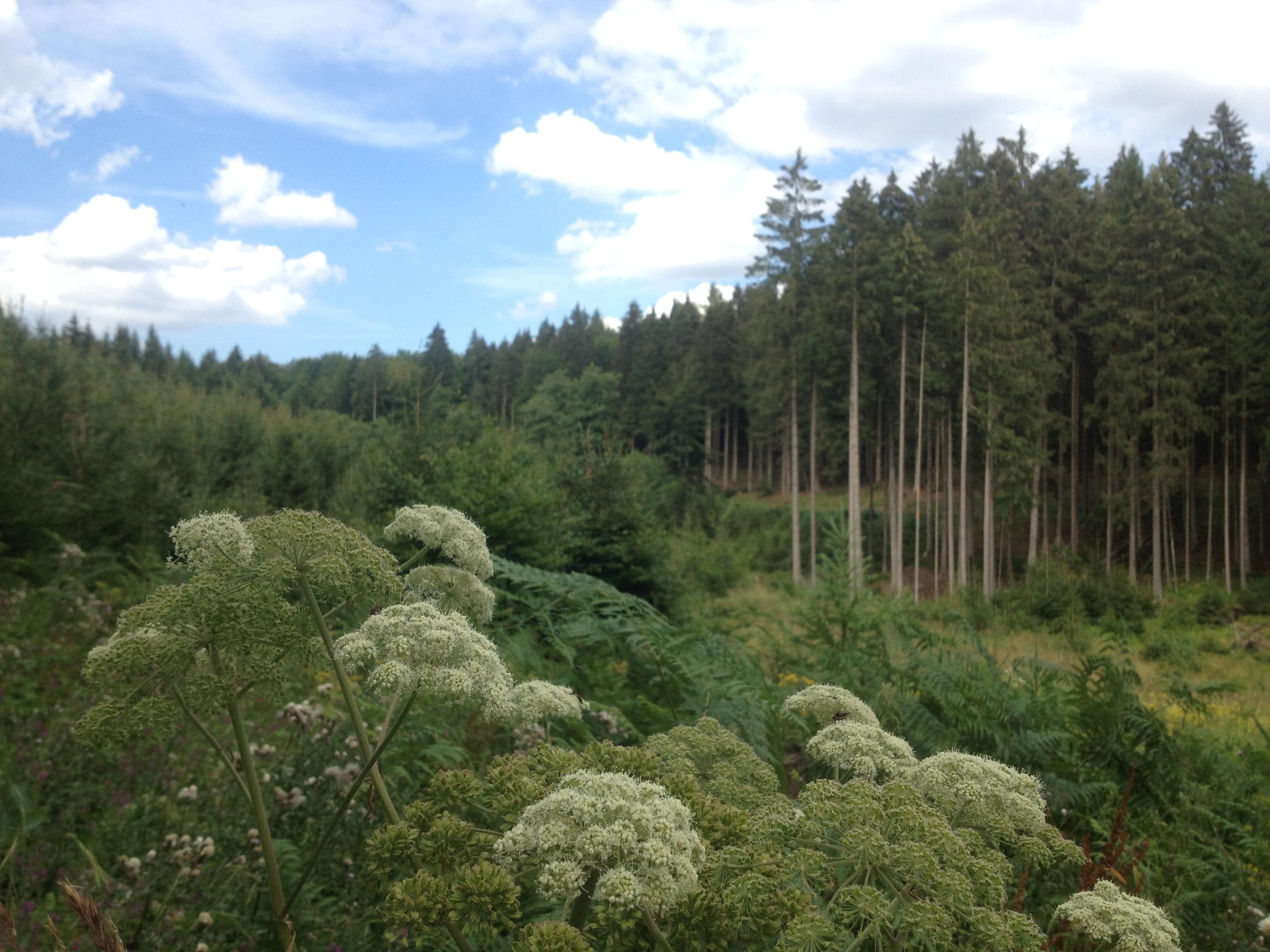 Verliehausener Wald - Ausläufer vom Solling